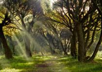 сказки венского леса
